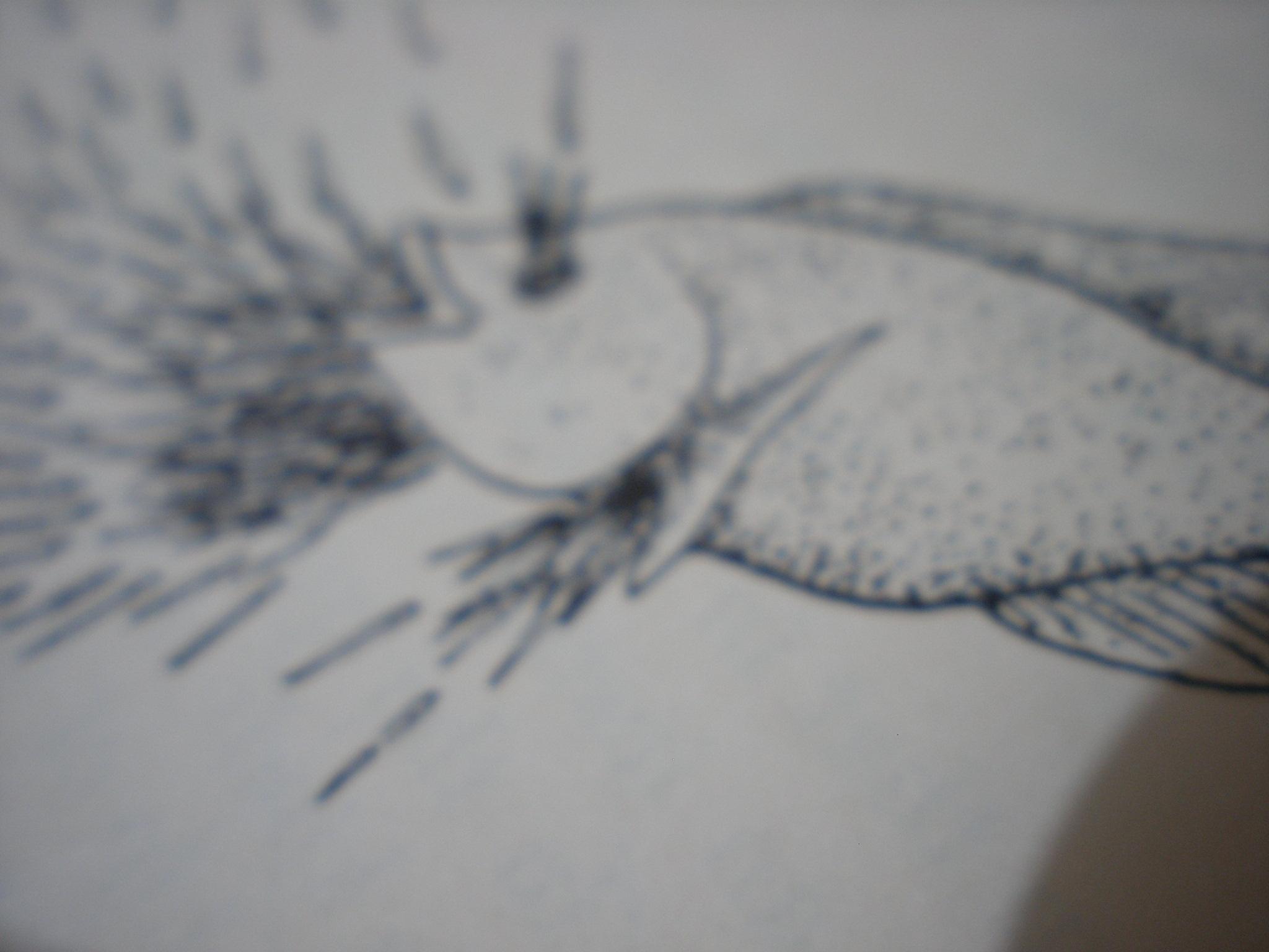 August 2010 Page 4 Iwansuwandys Blog