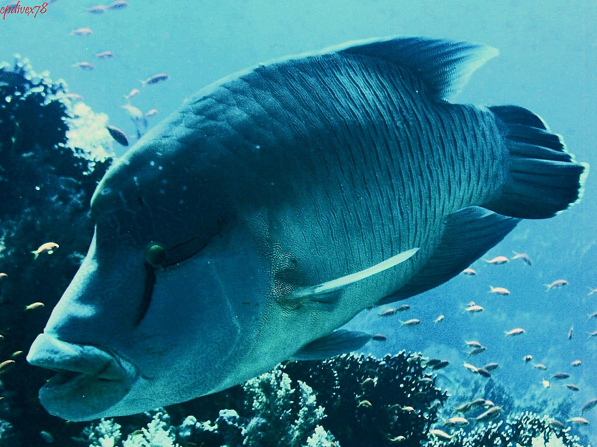 The Rare River Fish In the World Including Indonesia ...